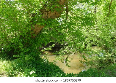 A Bank along a Stream in the  Woods