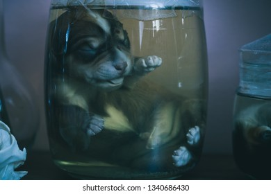 Bank with embalmed puppy on the table. Capacity with a dead dog.