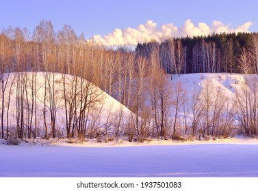 The bank of the Inya River in winter. Bare birches at the foot of a high slope with trees at the top among blue drifts of snow in the morning pink light against  sky . Novosibirsk, Siberia, Russia