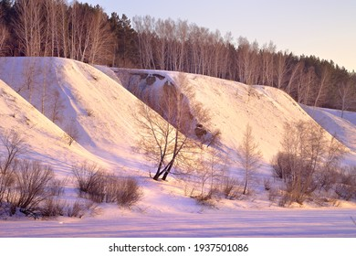 The bank of the Inya River in winter. A bare birch tree at the foot of a high slope with trees at the top among blue drifts of snow in the morning pink light. Novosibirsk, Siberia, Russia