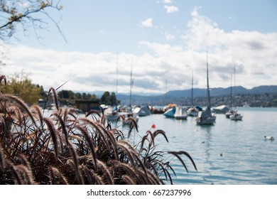 Bank Of Lake Zurichsee With Grass In The Foreground And Sailing Ships On The Lake In The Harbour Of Zurich