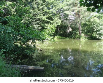 The bank of a pond in hot sunny day.