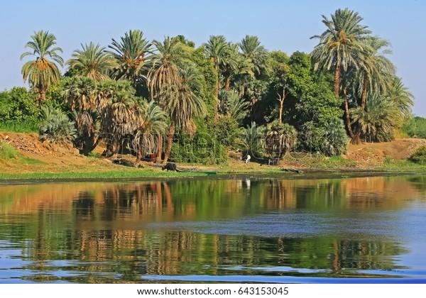 The Vegetation of Egypt