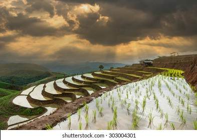 Bann Pa Bong Pieng rice terraced field with Unidentified Mountaineer are walking on the ridge between planting rice in far away, Mae Chaem, Chiang Mai, Thailand