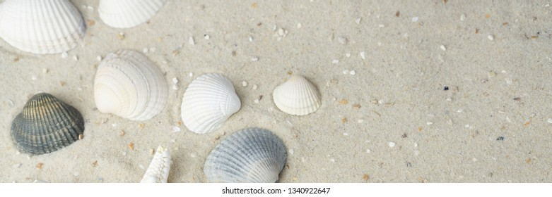 Banner of a beach top view with shells and sand