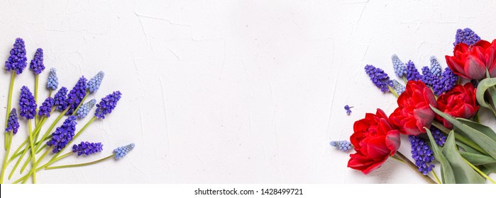 Banner with blue grape hyacinths  and red tulips  on  white textured  background. Floral still life. Blue grape  hyacinths flowers.  Selective focus. Place for text. Top view.