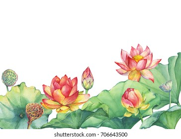 Banner, border of pink Egyptian lotus flower with leaves, seed head, bud (water lily). Watercolor hand drawn painting illustration isolated on white background.