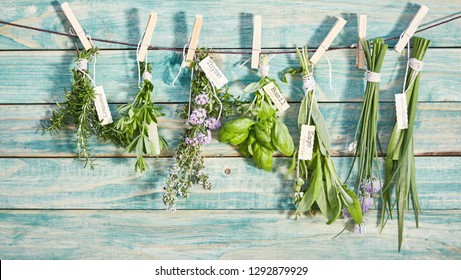 Banner of bunches of different named fresh herbs hanging on a line by wooden pegs over a rustic blue wood wall with copy space