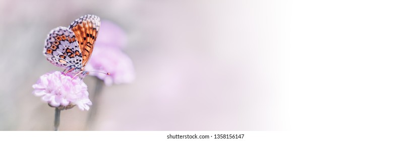 Banner with butterfly and blooming flower nature macro. Pastel colors background with copy space. Soft focus, panoramic view
