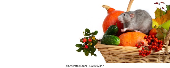 Banner. Cute rat dumbo with vegetables on a white isolated background. Branches of mountain ash, rose hips, pumpkin and other vegetables in a wicker basket. Rat is a symbol of Chinese New Year 2020