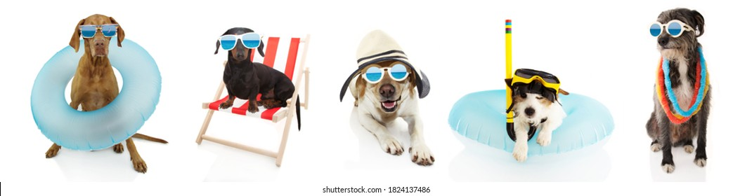 Banner five pets dogs going on summer vacations, dachshund resting on beach chair ans pointer and jack russell inside a inflatable. Isolated on white background.