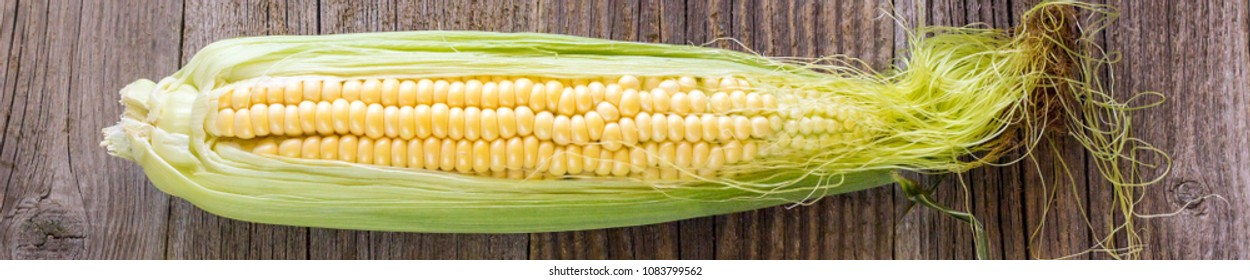 Banner of Fresh corn on cobs on rustic wooden table, closeup, top view, copy space.
