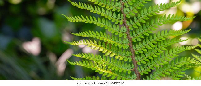 banner with fresh young green fern leaf with copy space