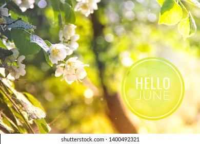 Banner hello june. Text on the photo. Text hello June. New month. New season. Summer month. Text on a photo of flowers. Flowers and plants. Jasmine bush flowers. Tree branch
