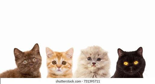 Banner with kittens and cats. Background with animals for text insertion, advertising banner, invitation, welcome. Isolated on white background
