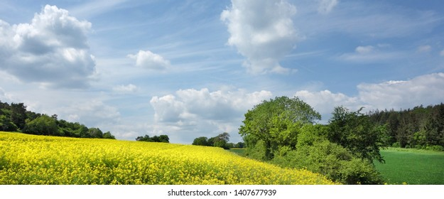 Banner with landscape and rape field in spring