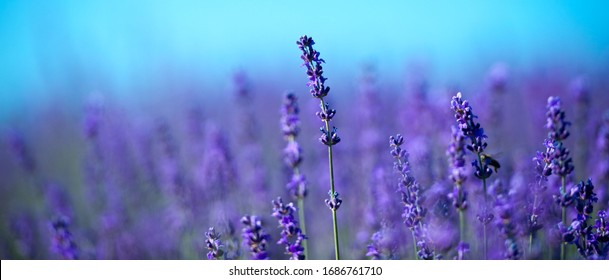 Aromatherapy Banner Stock Photos Images Photography Shutterstock