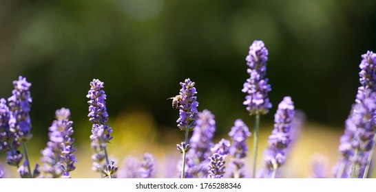 Aromatherapy Banner Images Stock Photos Vectors Shutterstock