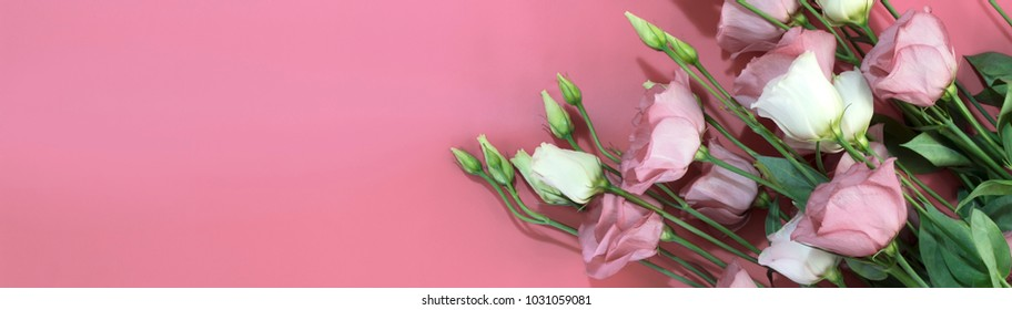 Banner for a long design with pink and white flowers on a pink background