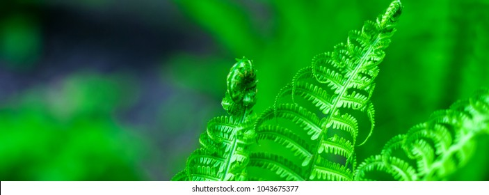 banner spring bright green fern background shallow depth of field