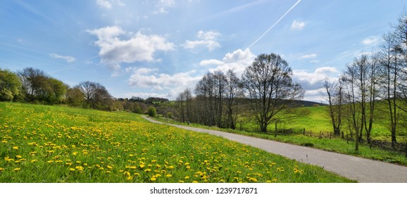 Banner with spring meadow