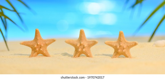 Banner of Three starfish stand in a row on the seashore on a sunny day. Summer vacation concept with copy space. Seastar on the sandy beach against the backdrop of the ocean and palm leaves.