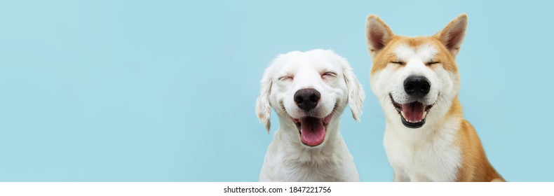 Banner two smiling dogs with happy expression. and closed eyes. Isolated on blue colored background. - Shutterstock ID 1847221756