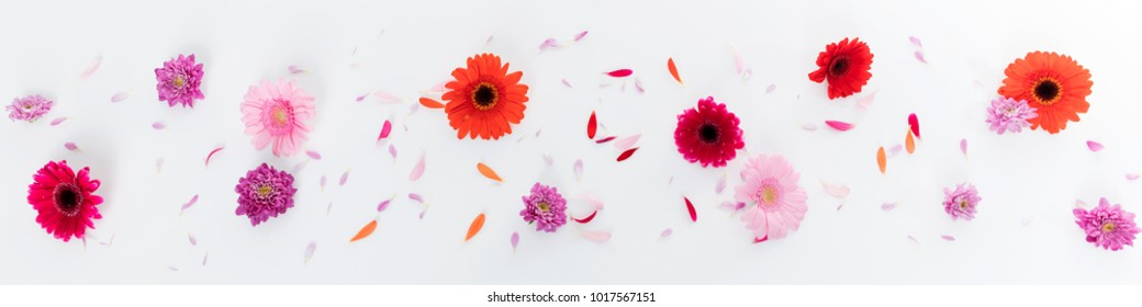 banner with various flower blossoms isolated on white background