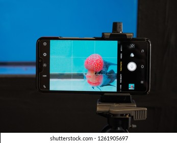 Banpong Fish Village, Ratchaburi -THAILAND, Dec. 16, 2018 : view of android smart phone recording a Flowerhorn Crossbreed Cichlid fish aquarium swimming in glass tank.