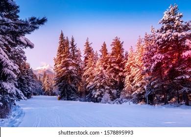 Bansko resort, Bulgaria panorama with ski slope and pink morning or sunset forest trees