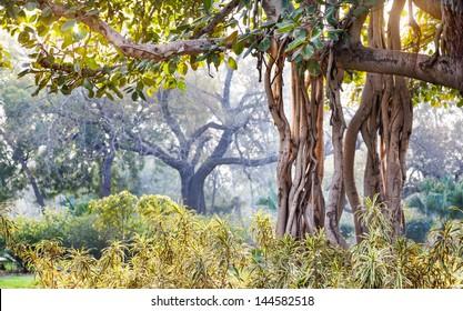 Banyan tree in Buddha Jayanti park, New Delhi, India