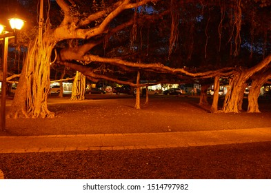 Banyan Tree in a Park maui hawaii lahaina