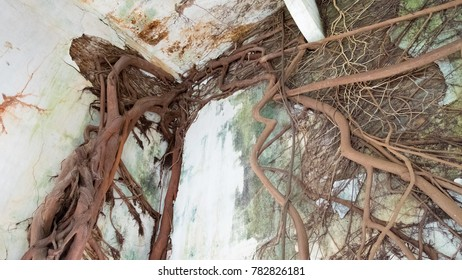Banyan tree root grow cover The church