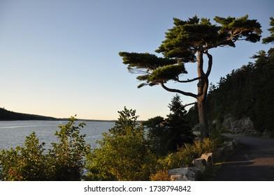 Banyan Tree Somes Sound Maine
