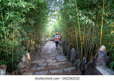 Bao Loc, Lam Dong province, Vietnam - Jun 2, 2019: Tourists walking on a paving stone trail through beautiful bamboo forests at Bao Loc, Lam Dong province, Vietnam