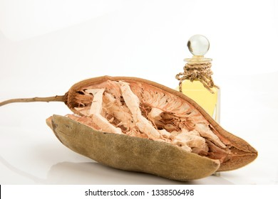 Baobab or monkey bread,fruits have medicinal properties.