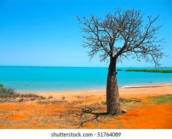baobab on the beach