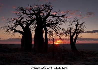 Baobab tree silhouette - Kubu island Botswana