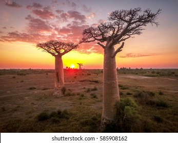 Baobab tree from the sky (drone), Madagascar