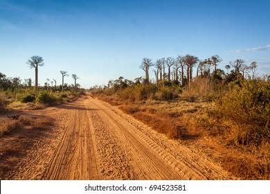 Baobabs road between Morondava and Belo sur Tsiribihina, western Madagascar