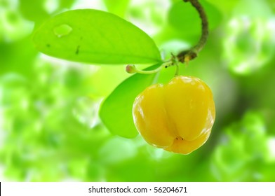 Barbados cherry.