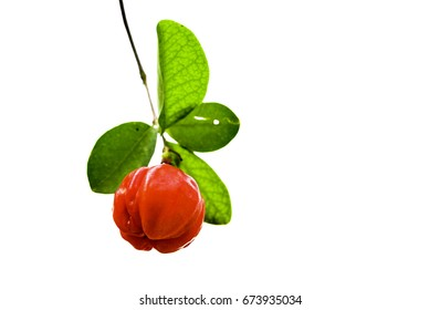 Barbados Cherry isolated white background
