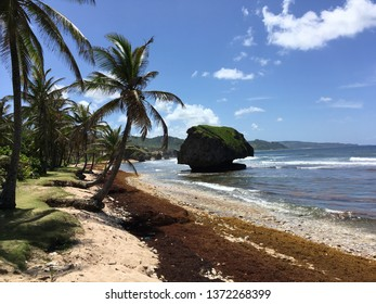 East Coast Barbados Images, Stock Photos & Vectors
