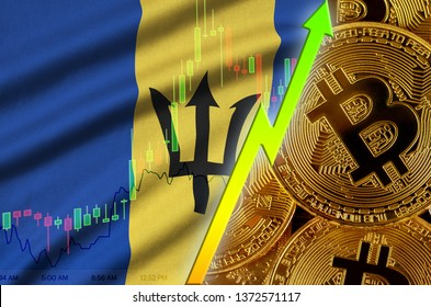 Barbados flag and cryptocurrency growing trend with many golden bitcoins