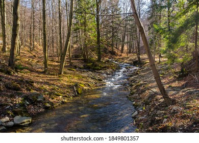Barbara Stream in the Wapienica Valley, Beskid Sląski (Silesian Beskids), Western Carpathians, Poland