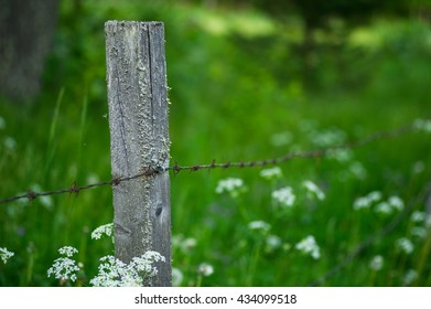Barbed wire around a summer meadow used as grazing land.