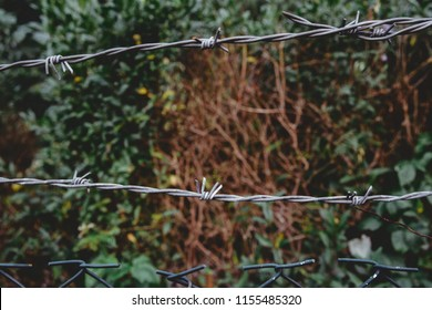 Barbed wire. Close-up on the spondylitis. Barbed wire fence, no passage. Separating two places from each other, the transition is impossible.