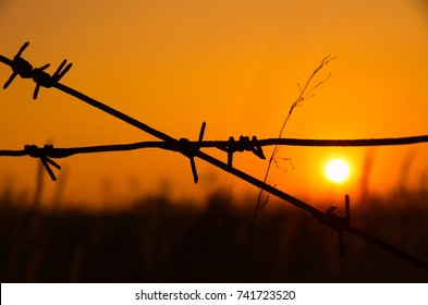 Barbed wire close-up at sunset. Close up rusty barbed wire with gold sunlight. Barbed wire with twilight sky.