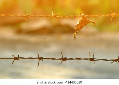 barbed wire with dry tree leaf and cross process with soft flare filter
