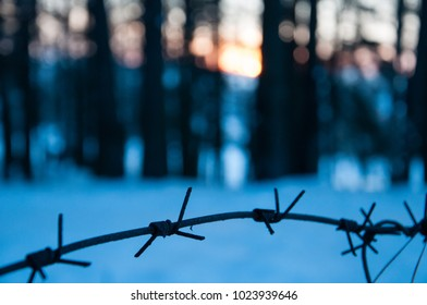 Barbed wire fence in the forest. ?oncept of the judicial system